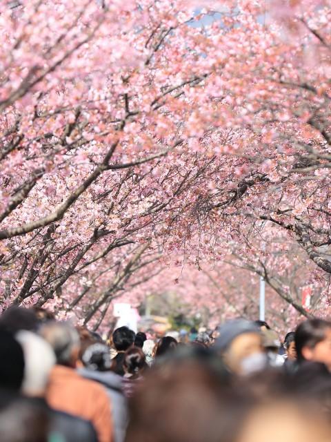 people blossom