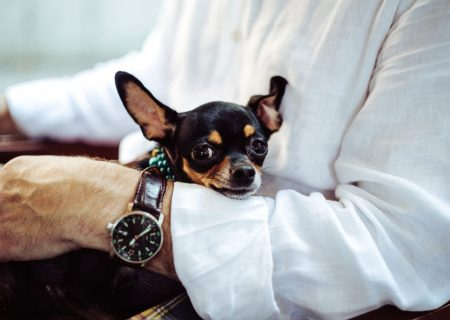 Entrepreneur Journey: Building an eMarket for Used Luxury Watches
