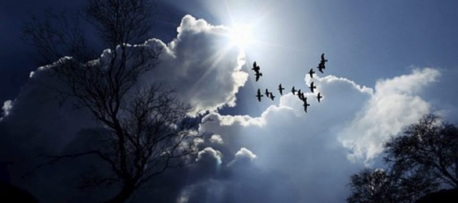 5 Good Reasons to Migrate to the Cloud
