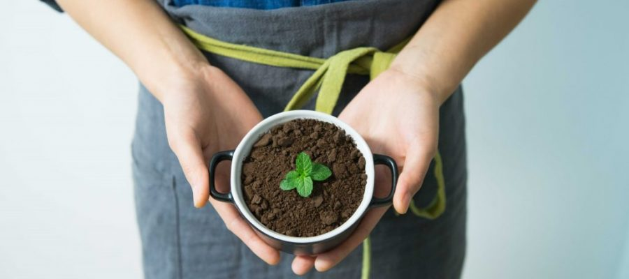 Top Agricultural Startup Ideas For Entrepreneurs To Consider