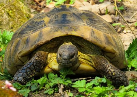 The Advantages of Slow Growth for StartUps